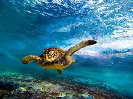 animals-cute-hawaii-ocean-favim-com-1987542