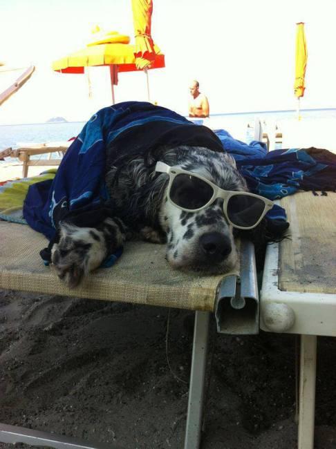 summer-picture-beach