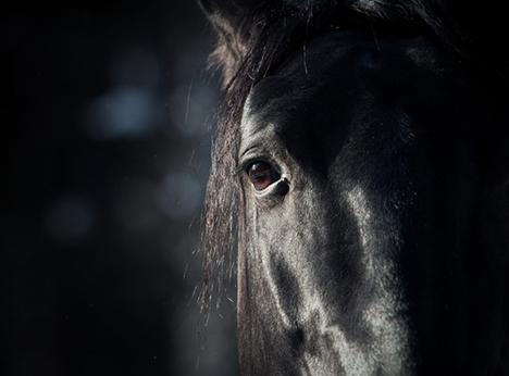Blk Horse