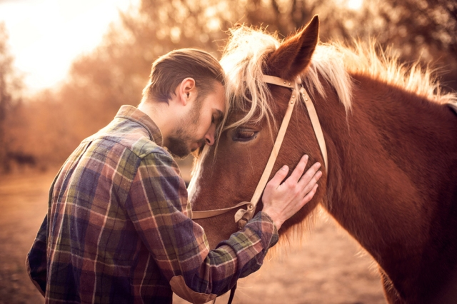 20170706mia1020 horse